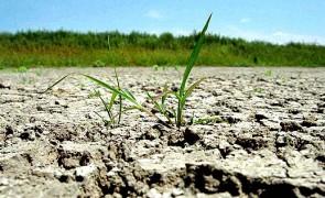 Florin Cîțu respinge riscul ca agricultorii să nu primească despăgubiri de secetă